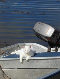 Cat in Boat