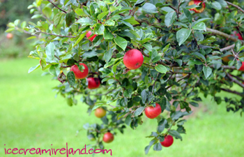 Appletree
